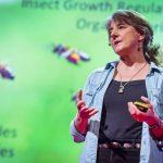 Χτίζοντας τα θεμέλια για μια ορθή αγορά γενετικά βελτιωμένων βασιλισσών: η ομάδα της Μέλισσας (Bee team)