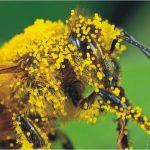 Γιατί τα συμπληρώματα πρωτεϊνών μπορούν να βοηθήσουν στη μείωση απωλειών των μελισσιών