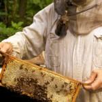 Ενισχύσεις μελισσοκόμων μικρών νησιών