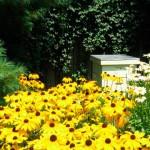 Προγράμματα στήριξης της μελισσοκομίας