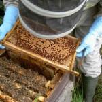Πενθήμερο Σεμινάριο Μελισσοκομίας από τον ΕΛΓΟ «ΔΗΜΗΤΡΑ»