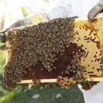 Ημερίδα για τη Μελισσοκομία στο Αγρίνιο