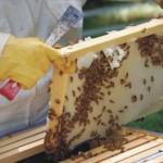 Χανιά: Προετοιμασία ημερίδας για τα προβλήματα της μελισσοκομίας