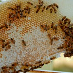 Ταχύρυθμες εκπαιδεύσεις από το Εργαστήριο Σηροτροφίας & Μελισσοκομίας του ΓΠΑ