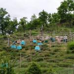 Ημερίδα για την ομαλή συμβίωση μελισσοκόμων και κτηνοτρόφων με την άγρια ζωή