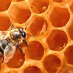 Και Μελισσοκομία στα μαθήματα του ηλεκτρονικού σχολείου της Ελληνικής Γεωργίας