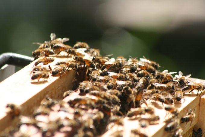Κέντρα Μελισσοκομίας