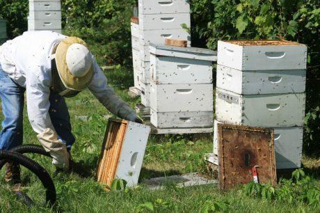 Προγράμματα Μελισσοκομίας