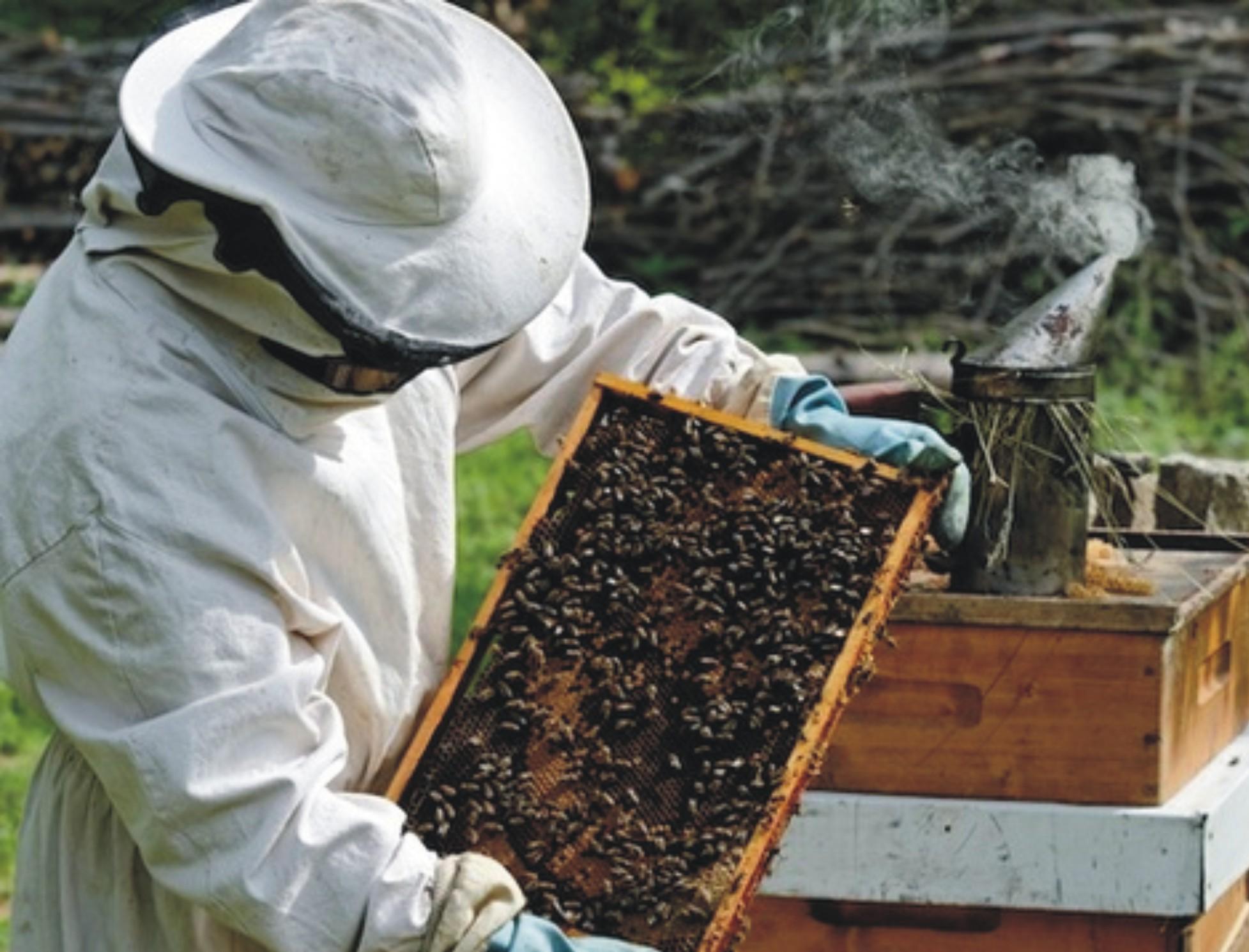 εκπαίδευση μελισσοκόμων