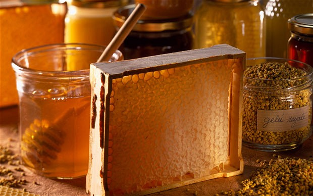 Σεμινάριο στην Μελισσοκομία
