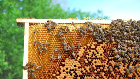 κονδύλια μελισσοκομία