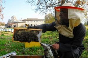 νέων μελισσοκόμων